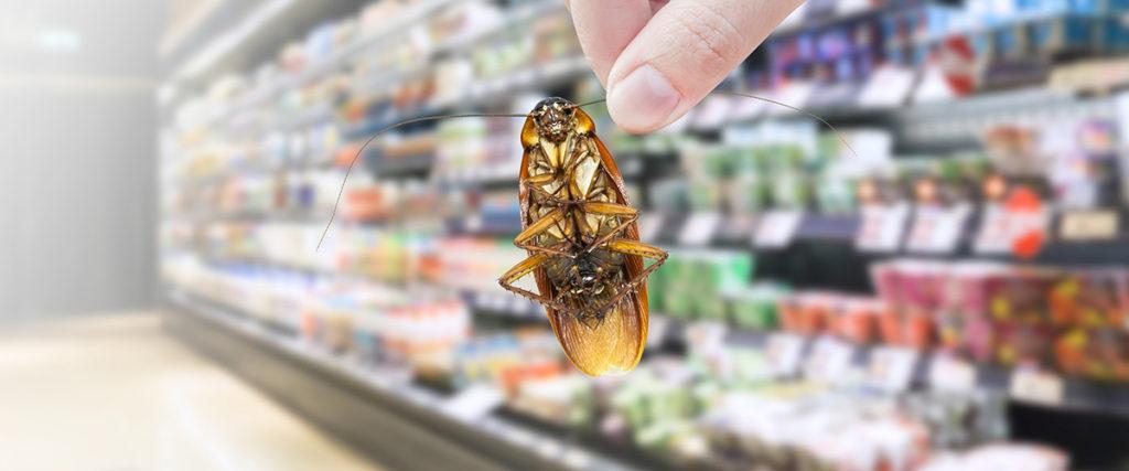 Schädling wird mit Hand vor Lebensmittelregal gehalten