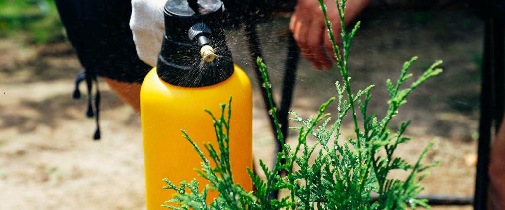 Schädlingsbekämpfung mit einer Sprühflasche in einem Garten in Stuttgart